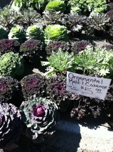 Kale and cabbages at the market