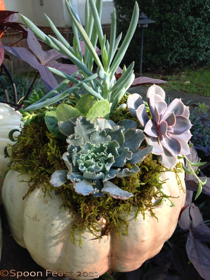 Pumpkin with Moss and Succulents
