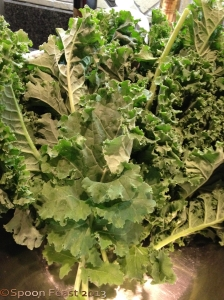 Fresh picked kale