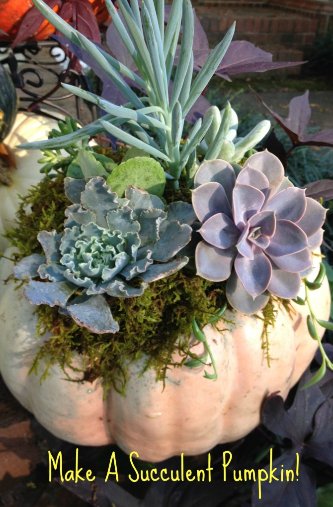 Make A Succulent Pumpkin!
