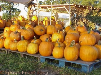 Pile of Pumpkins!