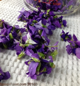 Drying wild violets to prepare for steeping